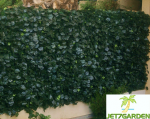 HAIE ARTIFICIELLE Feuillages DUO 1,50mx3m [SIMPLE FACE]/ JET7GARDEN